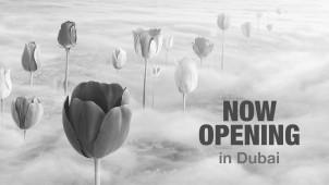 Exotica Dubai Tulips